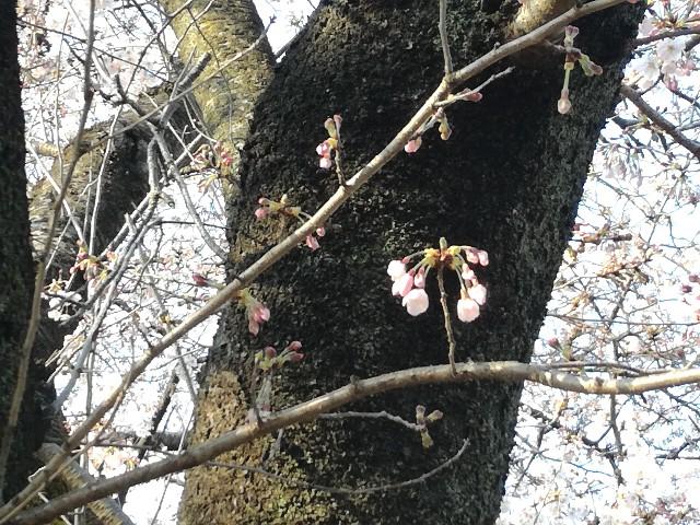f:id:Shiro-yanaka:20170404200017j:image