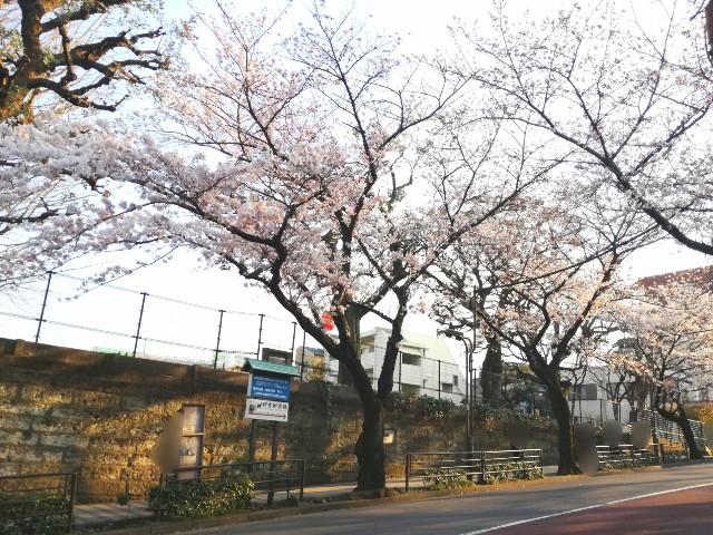 f:id:Shiro-yanaka:20170404200157j:image