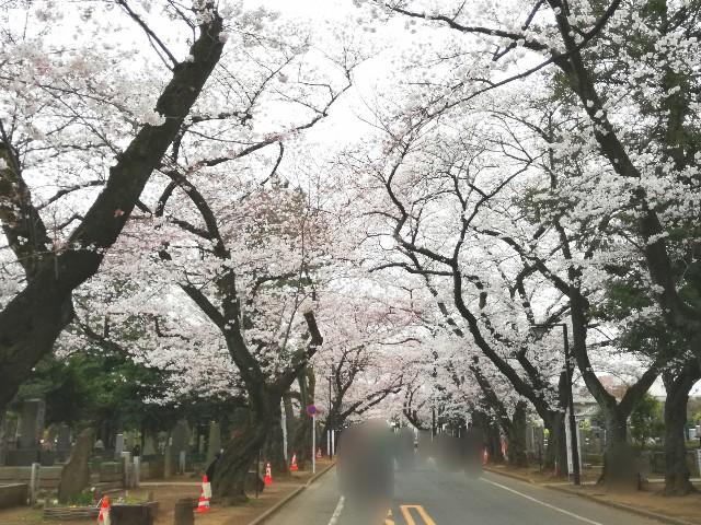 f:id:Shiro-yanaka:20170406204807j:image