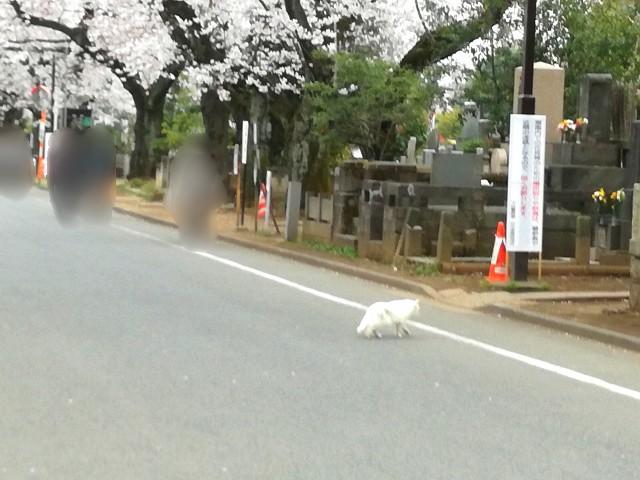 f:id:Shiro-yanaka:20170406205340j:image
