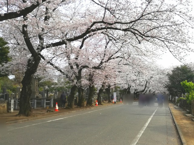 f:id:Shiro-yanaka:20170407173048j:image