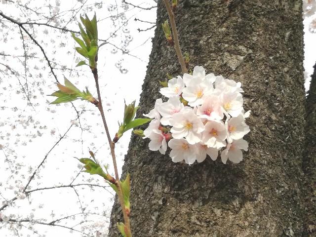 f:id:Shiro-yanaka:20170407173103j:image