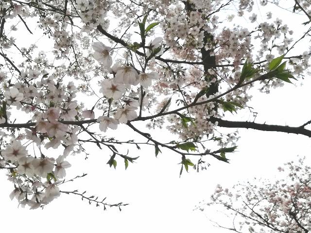 f:id:Shiro-yanaka:20170407173418j:image