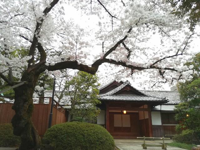 f:id:Shiro-yanaka:20170407174346j:image