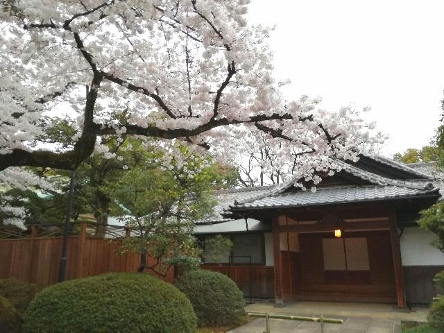 f:id:Shiro-yanaka:20170407174626j:image