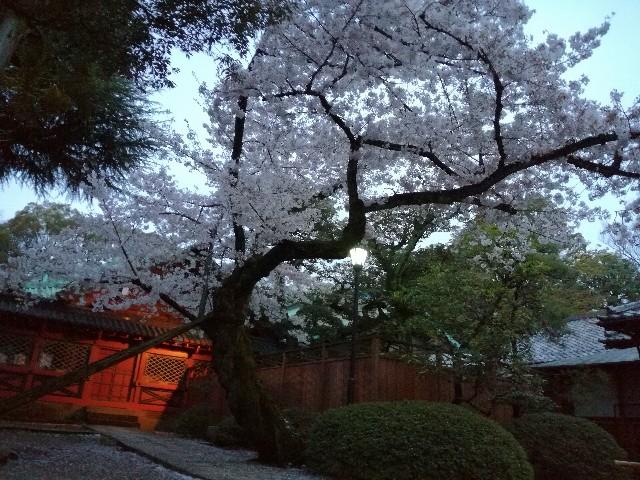 f:id:Shiro-yanaka:20170409001906j:image