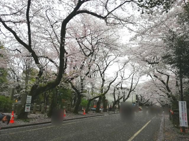 f:id:Shiro-yanaka:20170409222437j:image