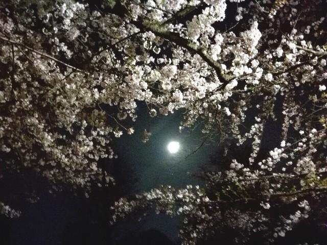 f:id:Shiro-yanaka:20170411030737j:image