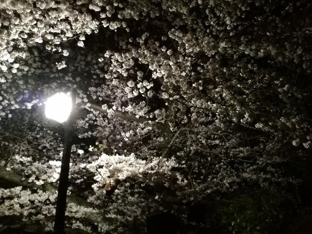 f:id:Shiro-yanaka:20170411031612j:image
