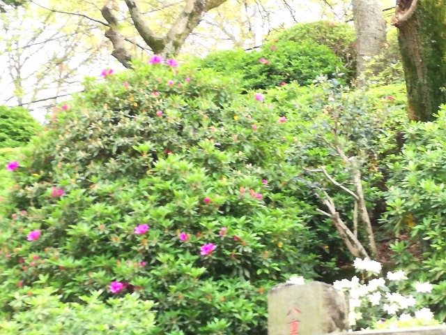 f:id:Shiro-yanaka:20170418235128j:image