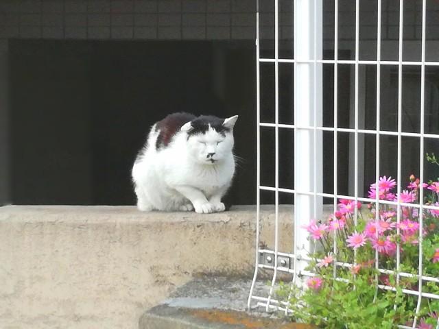 f:id:Shiro-yanaka:20170419160235j:image