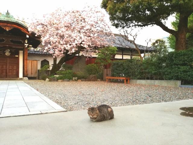 f:id:Shiro-yanaka:20170422012733j:image