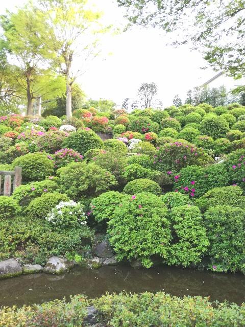 f:id:Shiro-yanaka:20170426001124j:image