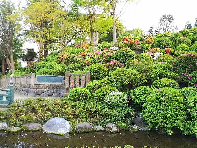 f:id:Shiro-yanaka:20170426002345j:image
