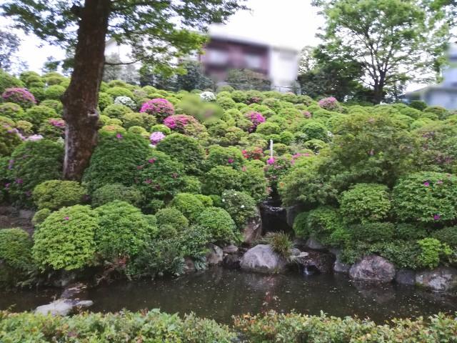 f:id:Shiro-yanaka:20170501123401j:image