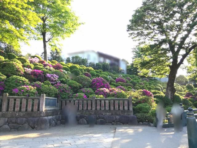 f:id:Shiro-yanaka:20170505211257j:image