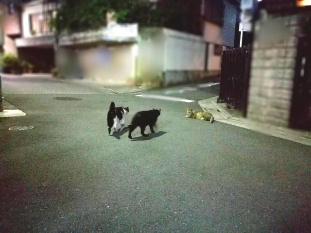 f:id:Shiro-yanaka:20170523032035j:image