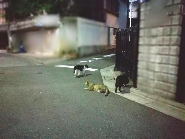 f:id:Shiro-yanaka:20170523032052j:image