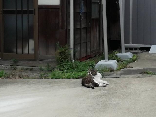 f:id:Shiro-yanaka:20170624213939j:image