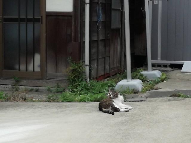 f:id:Shiro-yanaka:20170624214025j:image