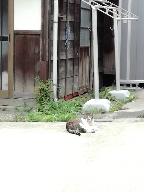 f:id:Shiro-yanaka:20170624214132j:image