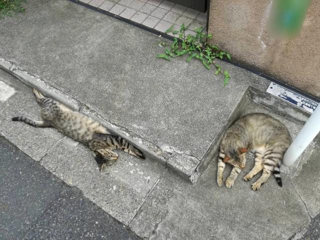 f:id:Shiro-yanaka:20170703000251j:image