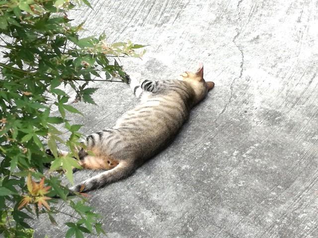 f:id:Shiro-yanaka:20170813191549j:image