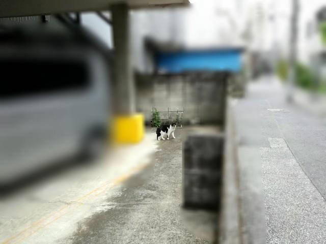 f:id:Shiro-yanaka:20170923044448j:image
