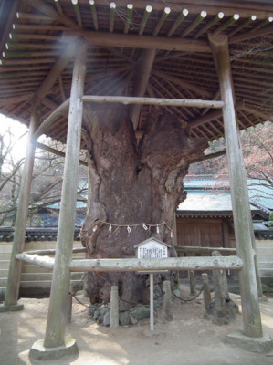 f:id:ShisyoTsukasa:20110101135740j:image