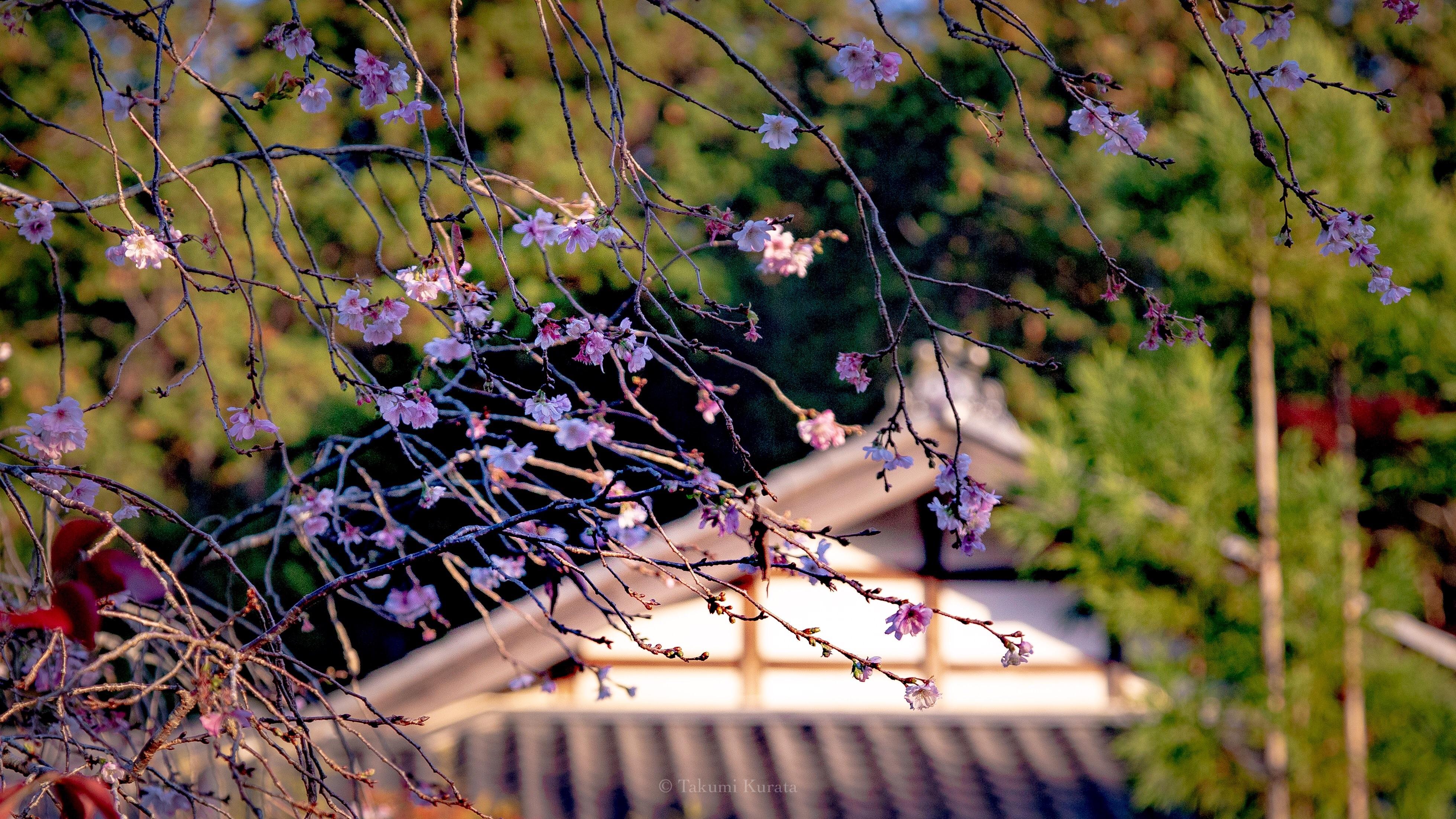 f:id:Shotetsuan:20181121124133j:image