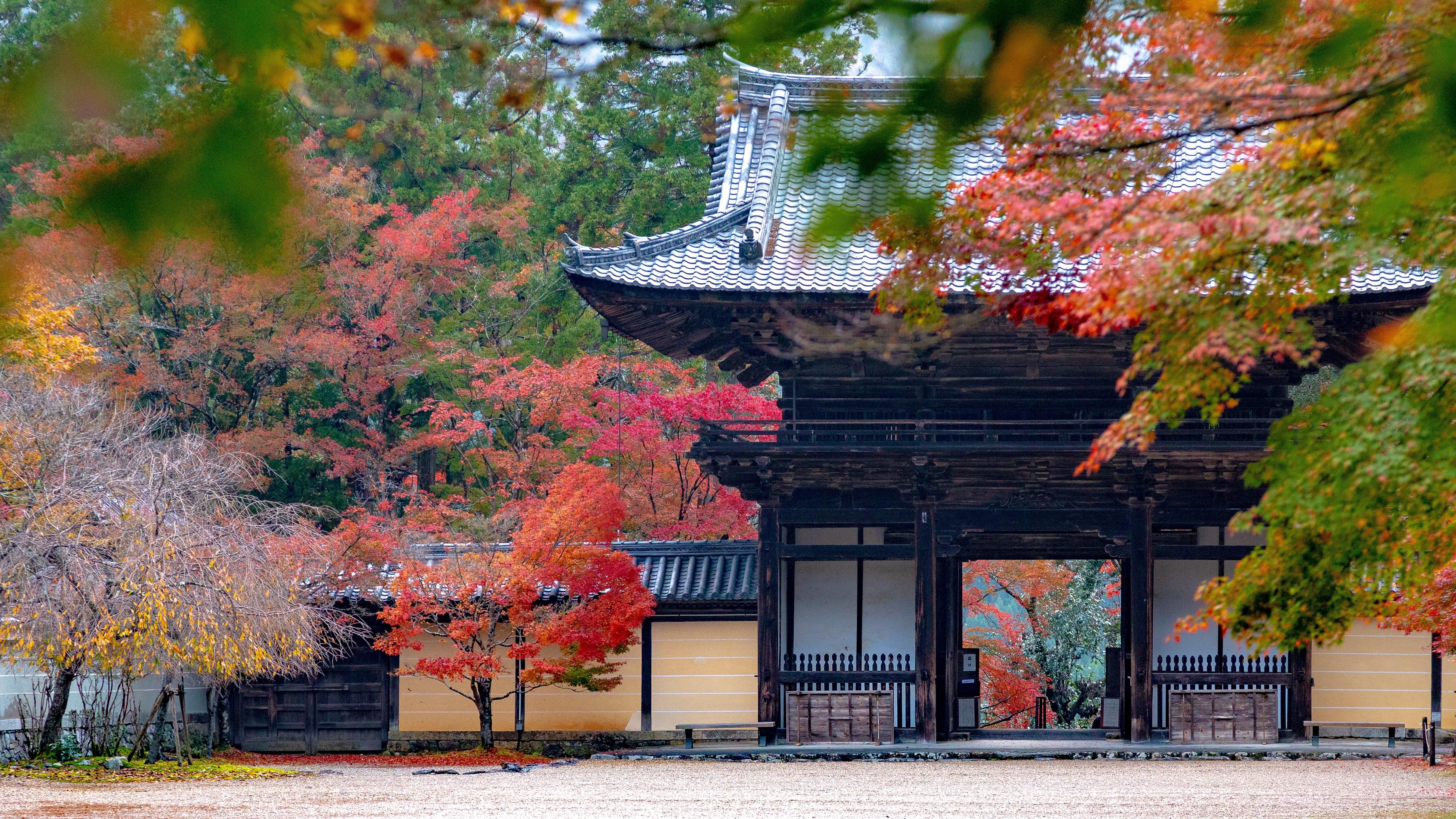 f:id:Shotetsuan:20181124172450j:image