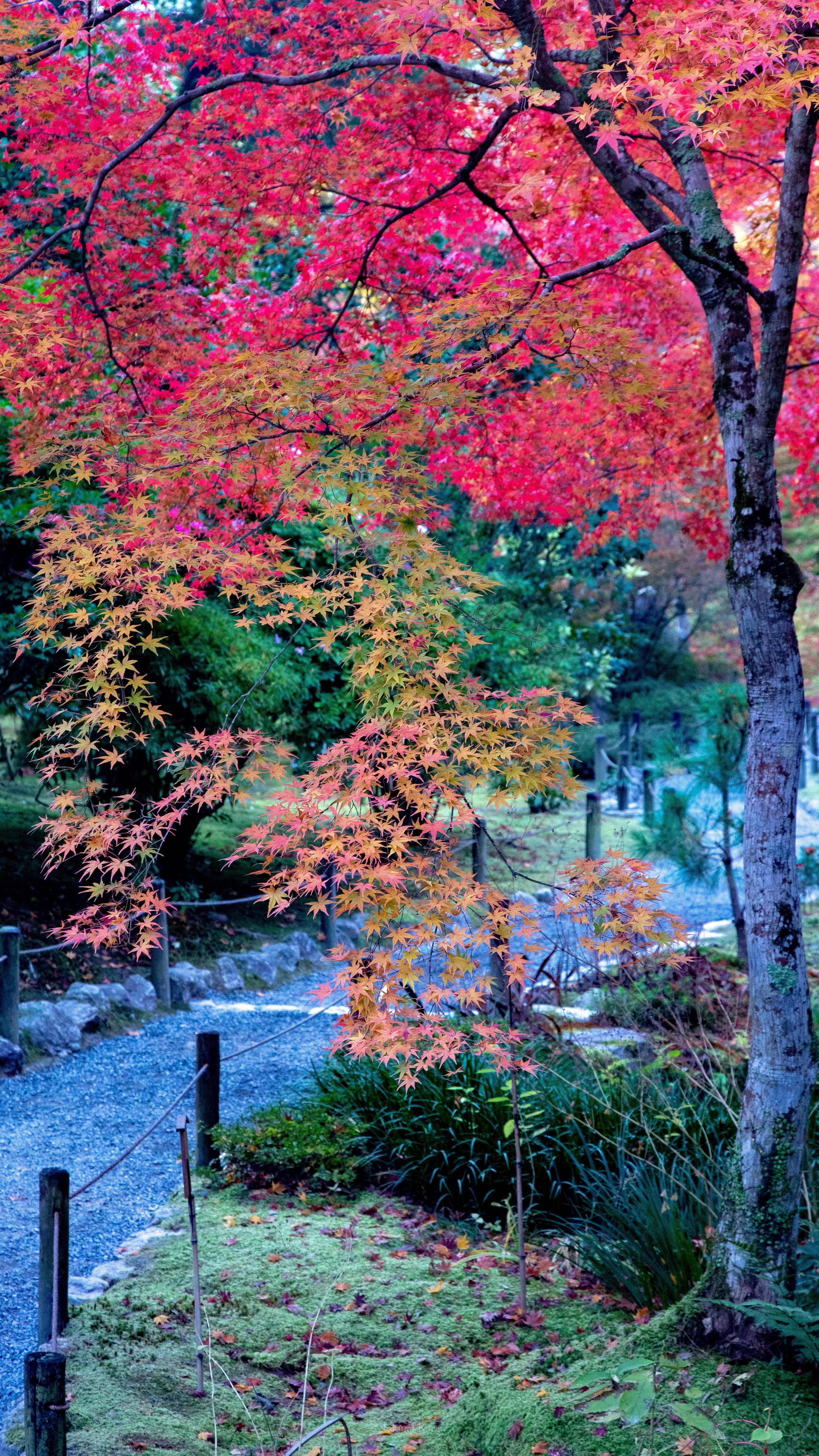 f:id:Shotetsuan:20181127083703j:image