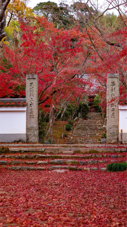 f:id:Shotetsuan:20181206211543j:image