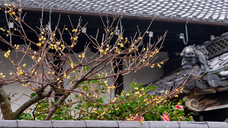 f:id:Shotetsuan:20190123223518j:image