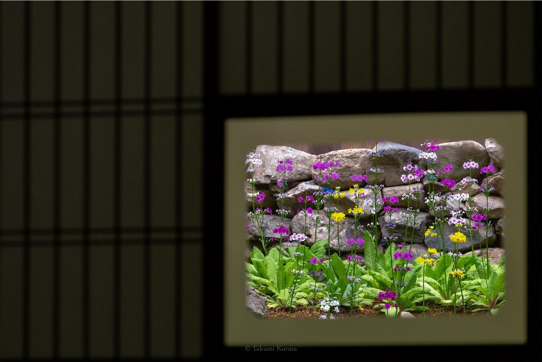f:id:Shotetsuan:20190520235216j:plain