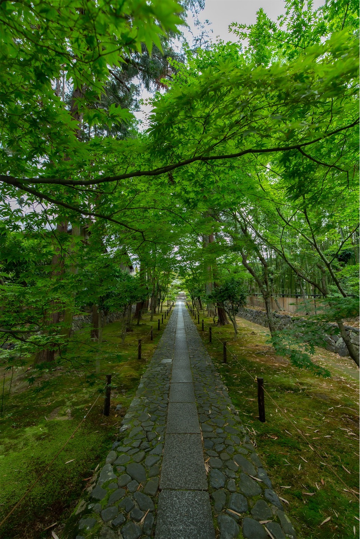 f:id:Shotetsuan:20190625131501j:plain