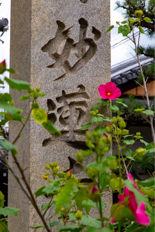 f:id:Shotetsuan:20190630003959j:plain