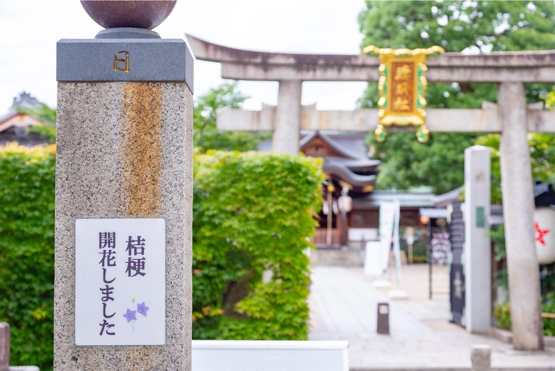 f:id:Shotetsuan:20190714065327j:plain