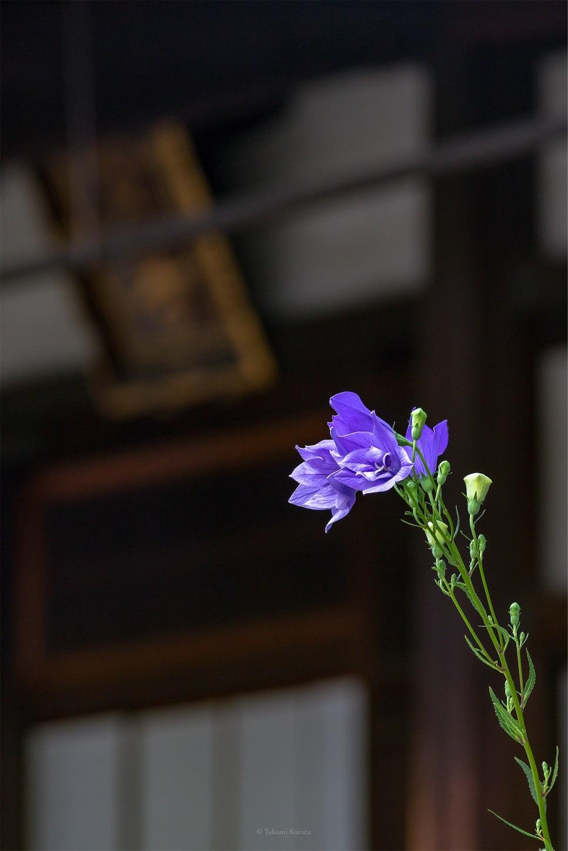 f:id:Shotetsuan:20190722182804j:plain