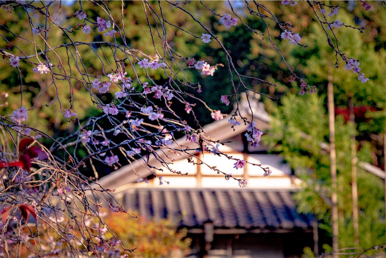 f:id:Shotetsuan:20190723194541j:image