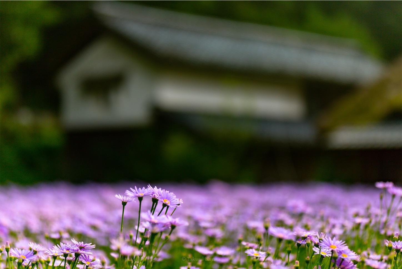 f:id:Shotetsuan:20190810110025j:plain