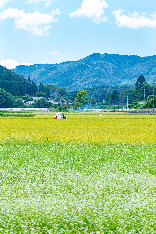 f:id:Shotetsuan:20190920200714j:plain