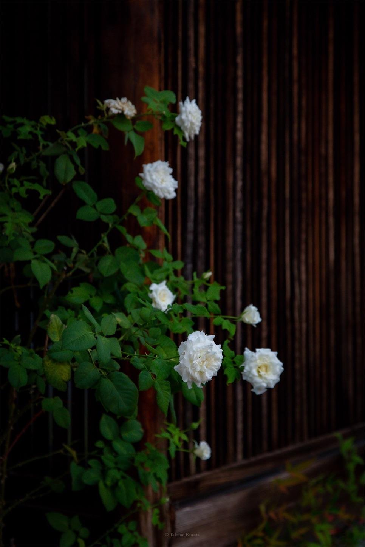 f:id:Shotetsuan:20190920201150j:image