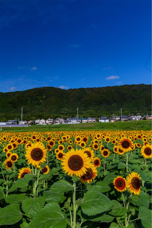 f:id:Shotetsuan:20190920201801j:plain