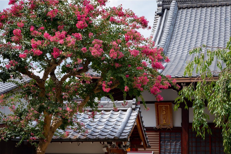 f:id:Shotetsuan:20190920202005j:image