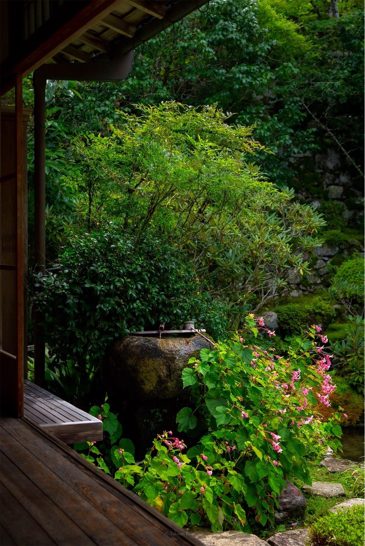 f:id:Shotetsuan:20190920202935j:image