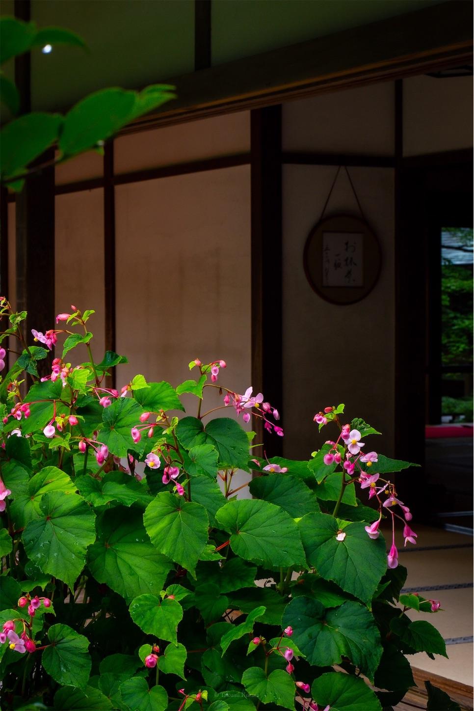 f:id:Shotetsuan:20190920203200j:image