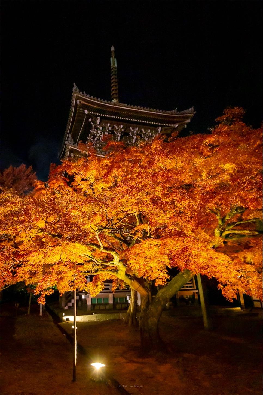 f:id:Shotetsuan:20191210083420j:image