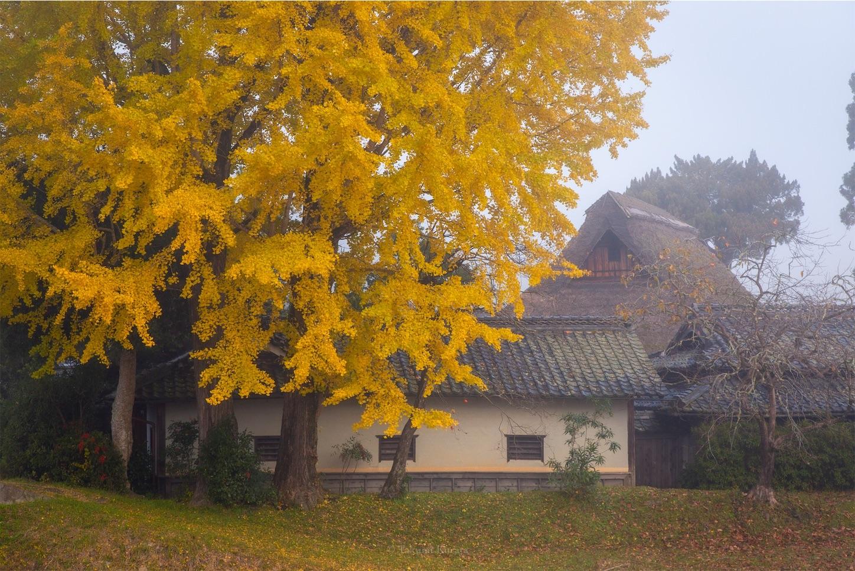 f:id:Shotetsuan:20200225142824j:image
