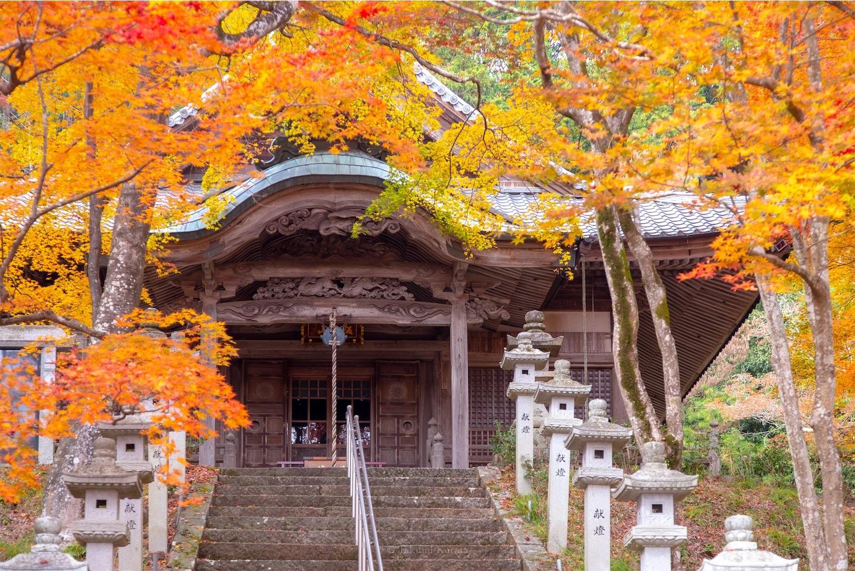 f:id:Shotetsuan:20200302074120j:image